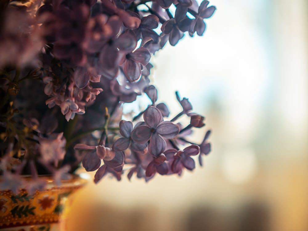 blumen, flora, grazil