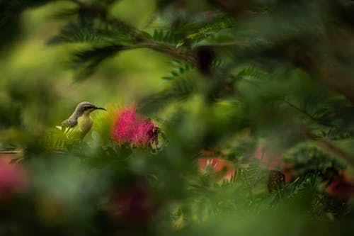 Pequeño Pájaro De Pico Marrón En El árbol