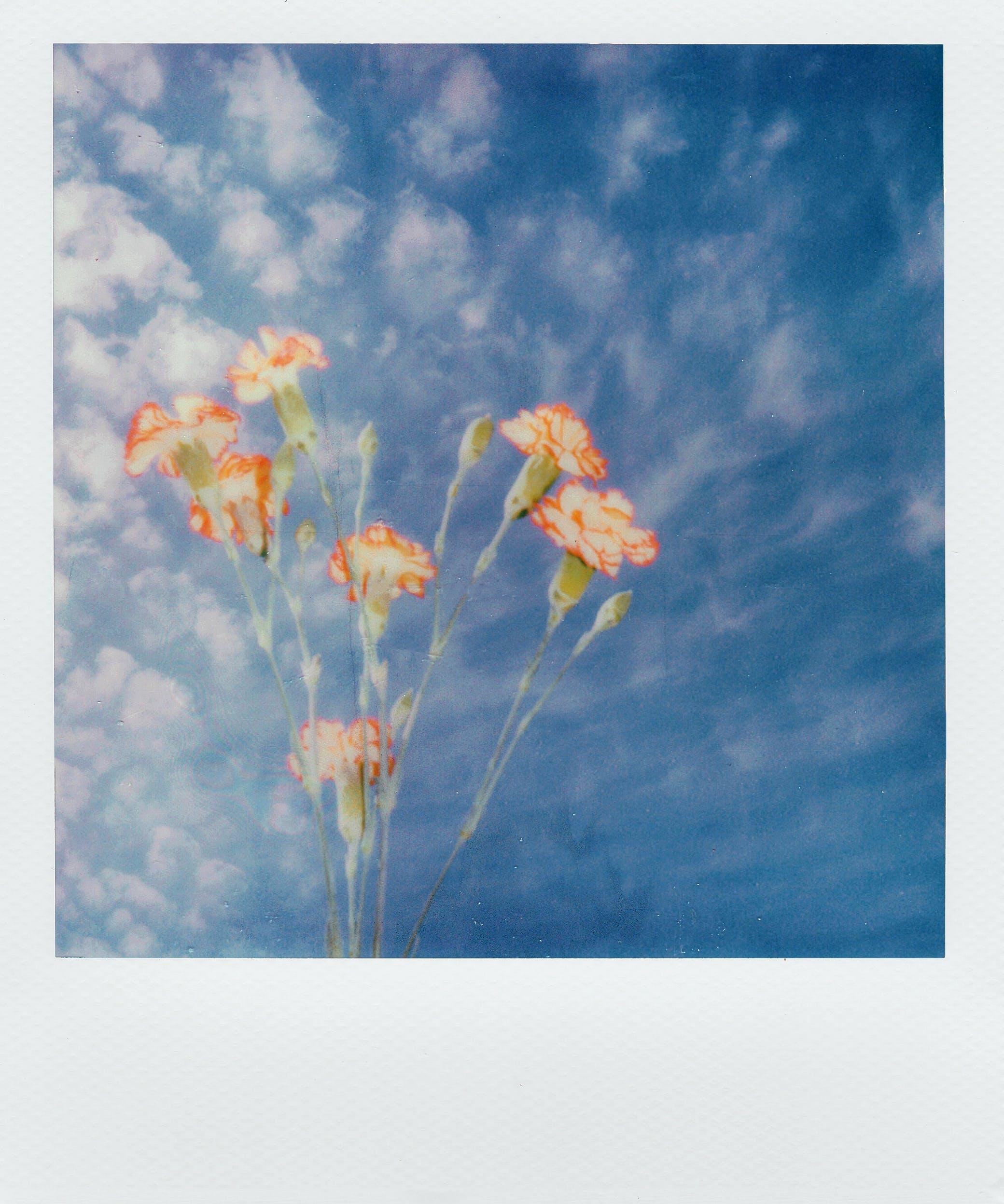 剪影, 增長, 夏天, 復古 的 免費圖庫相片