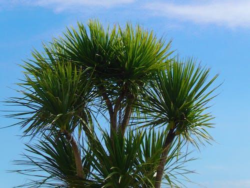 Free stock photo of arbre, bleu, ciel