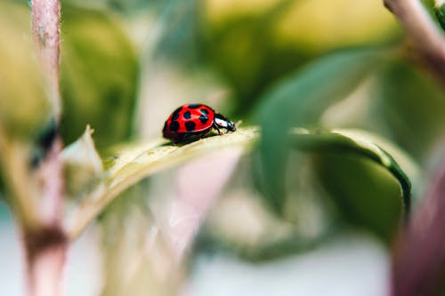Selective Focus Photo of Ladybird on Leaf