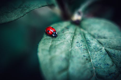 Selective Focus Photo of Ladybird on Green Leaf
