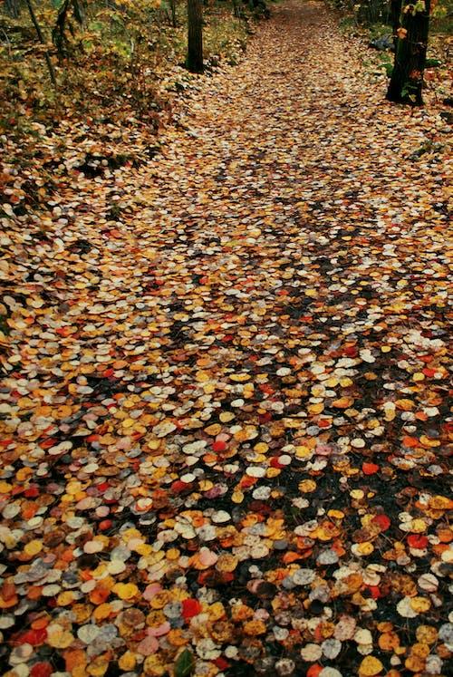 Darmowe zdjęcie z galerii z czerwony, droga, las, opadłe liście