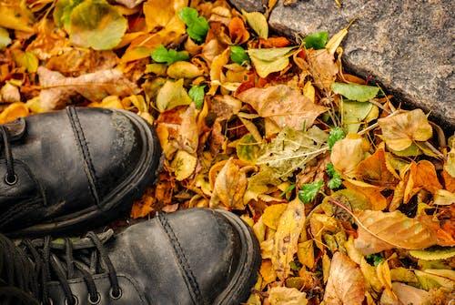 Darmowe zdjęcie z galerii z brązowy, buty, czarny, czerwony