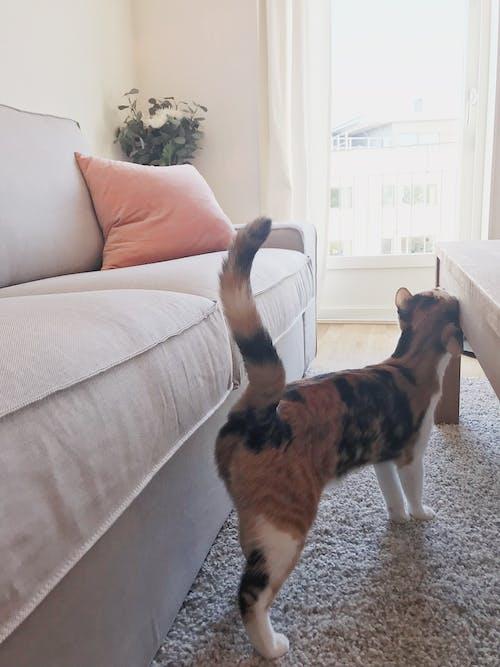 Darmowe zdjęcie z galerii z dom, kot, sofa, szczęśliwy