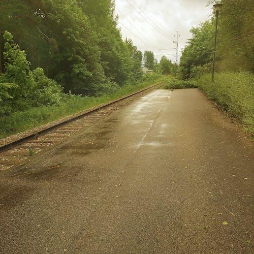 Darmowe zdjęcie z galerii z dworzec kolejowy, las, lato, opustoszały