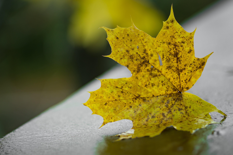 ぼかし, フォーカス, マクロ, 枯れ葉の無料の写真素材