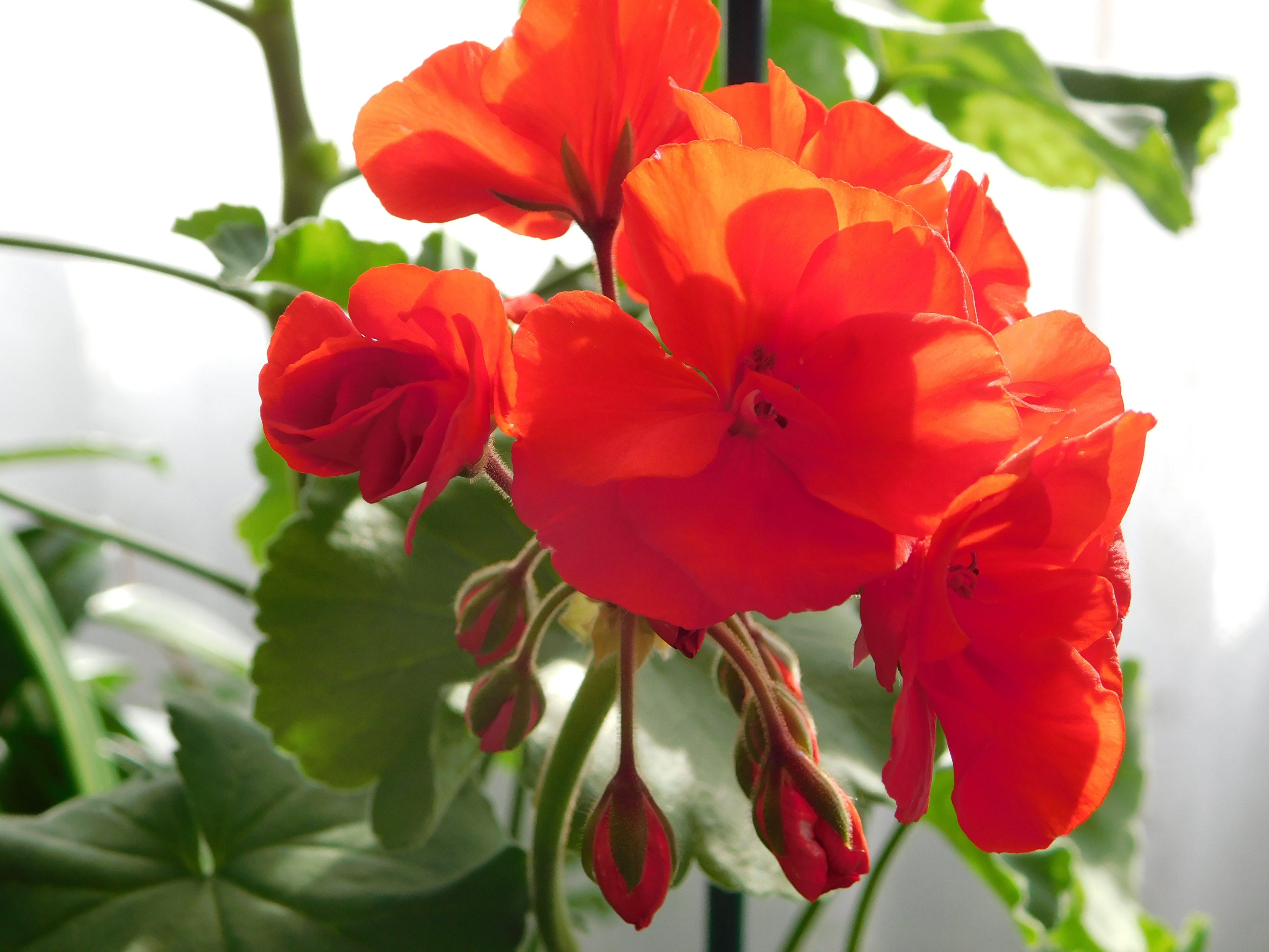 Darmowe zdjęcie z galerii z kolejna grupa kwiatów
