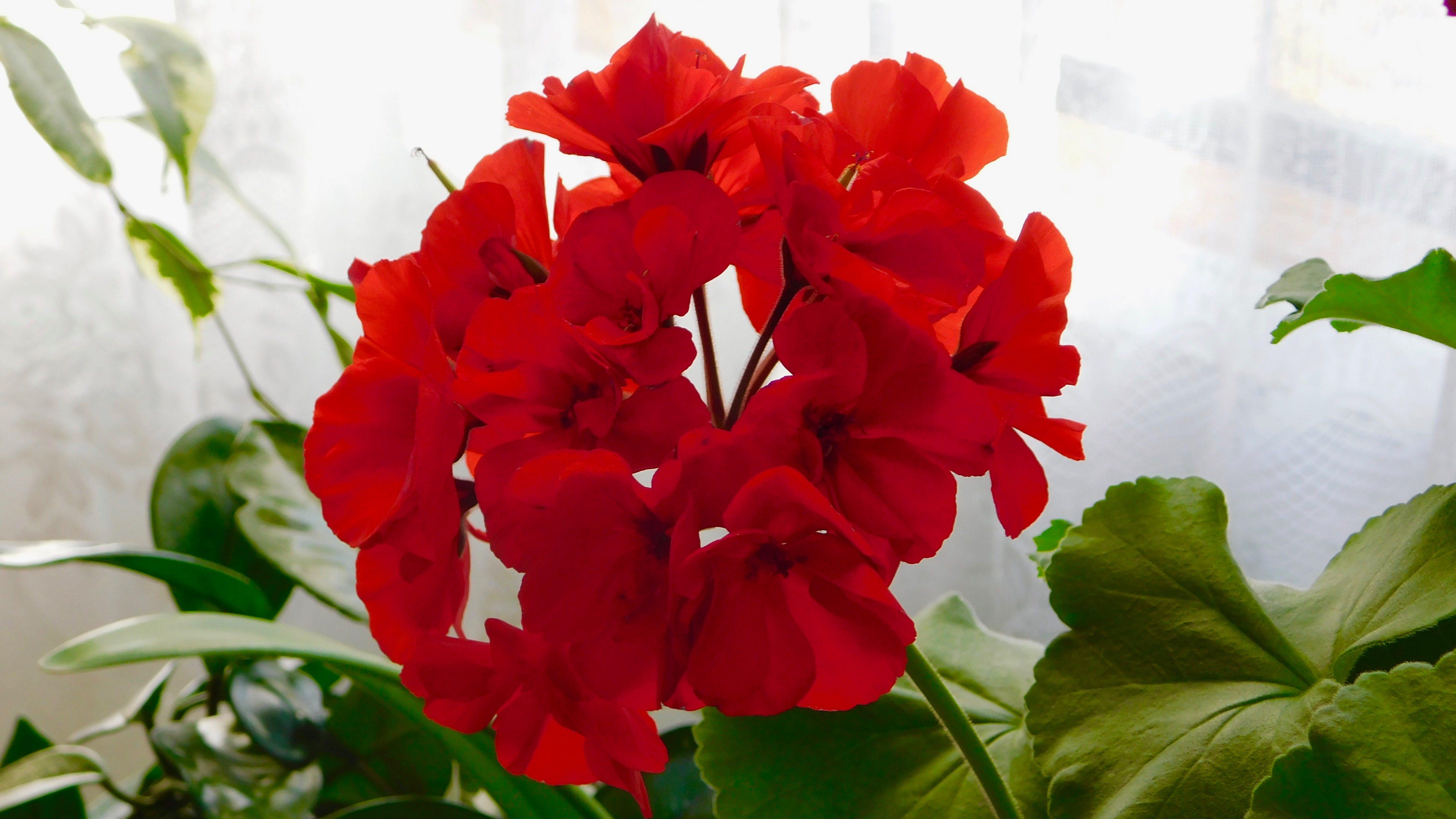 Darmowe zdjęcie z galerii z cudowna roślina