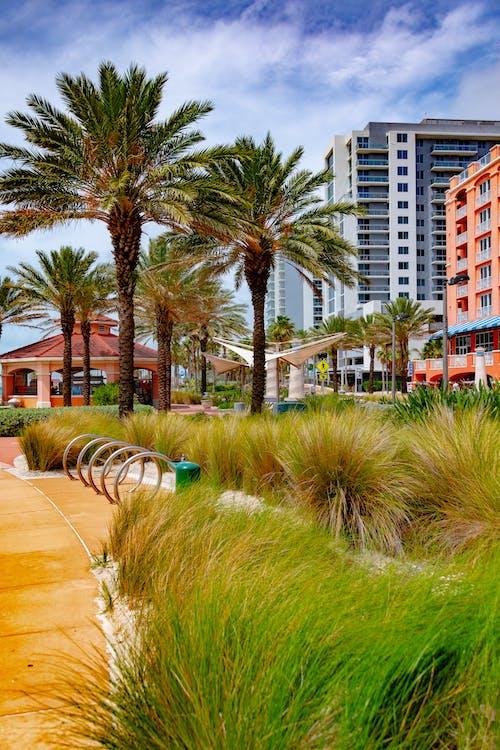 Δωρεάν στοκ φωτογραφιών με ηλιόλουστη μέρα, παραλία με καθαρό νερό, παραλία σκηνή, φοίνικας