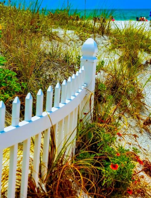 ビーチビュー, フェンス, 清水, 砂丘の無料の写真素材