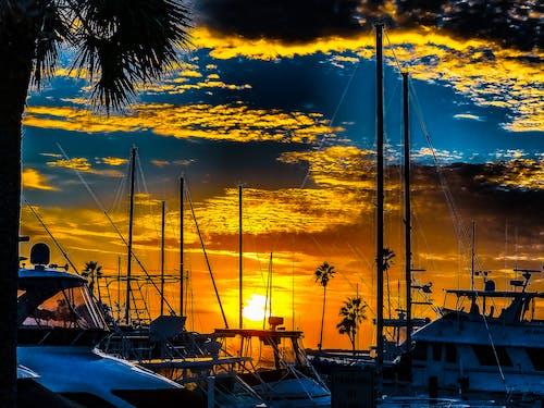 ゴージャスなシーン, ダニーデン桟橋, ビーチ, フロリダの無料の写真素材