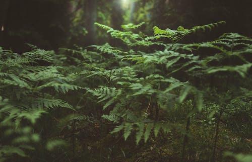 Foto d'estoc gratuïta de a l'aire lliure, arbres, brillant, clareja