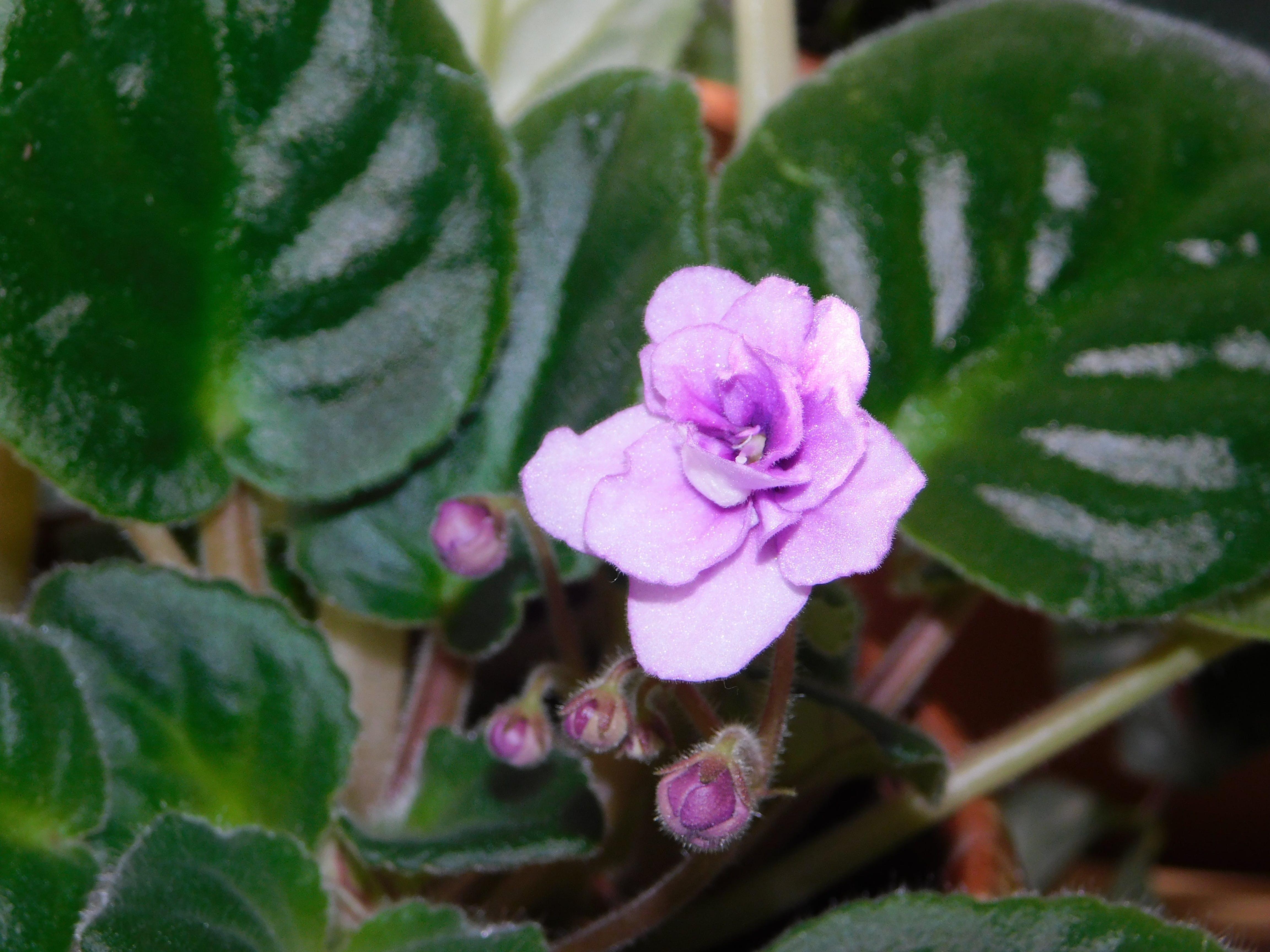 Darmowe zdjęcie z galerii z piękno w kwiatach