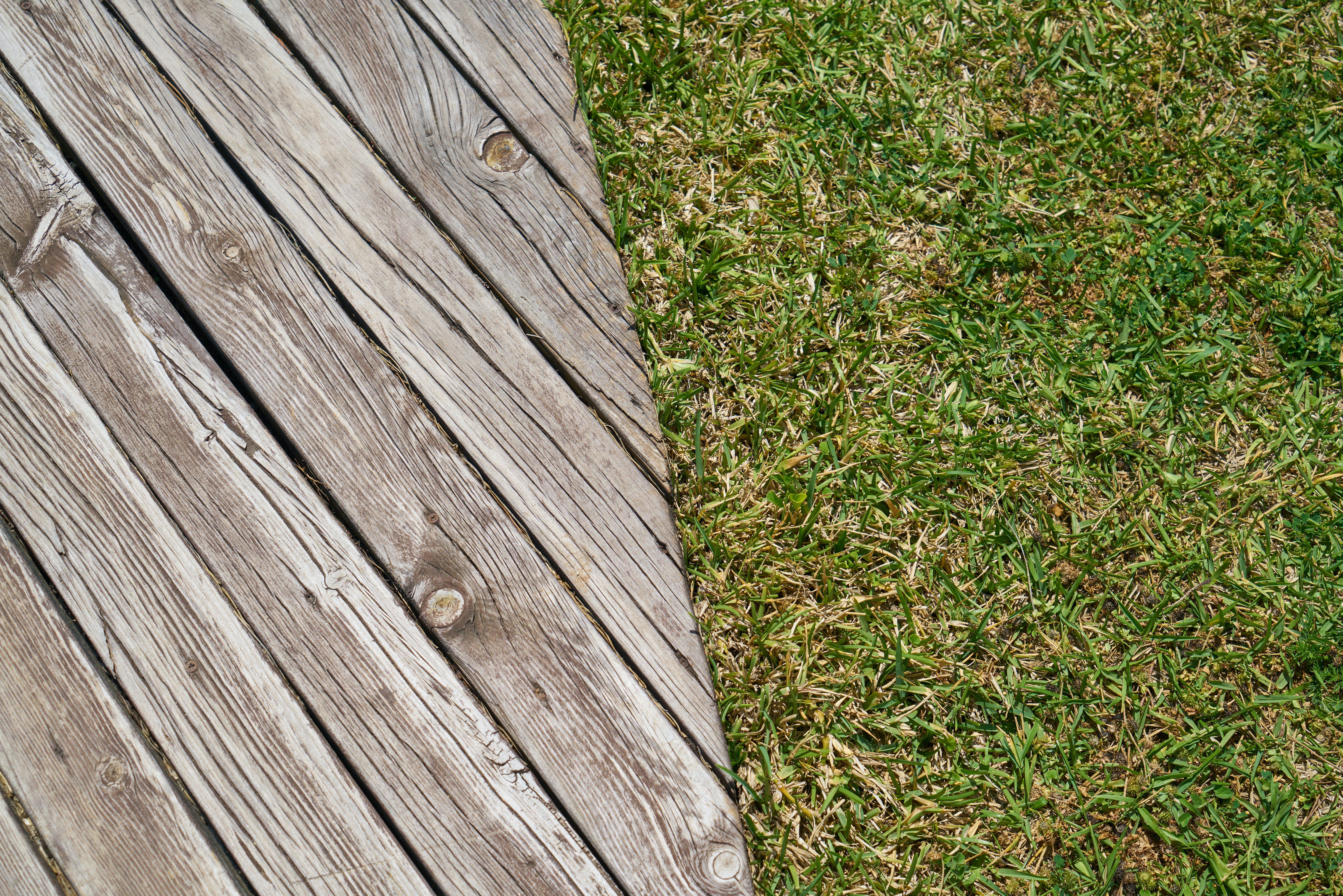 Ảnh lưu trữ miễn phí về cận cảnh, cỏ, gỗ, kết cấu
