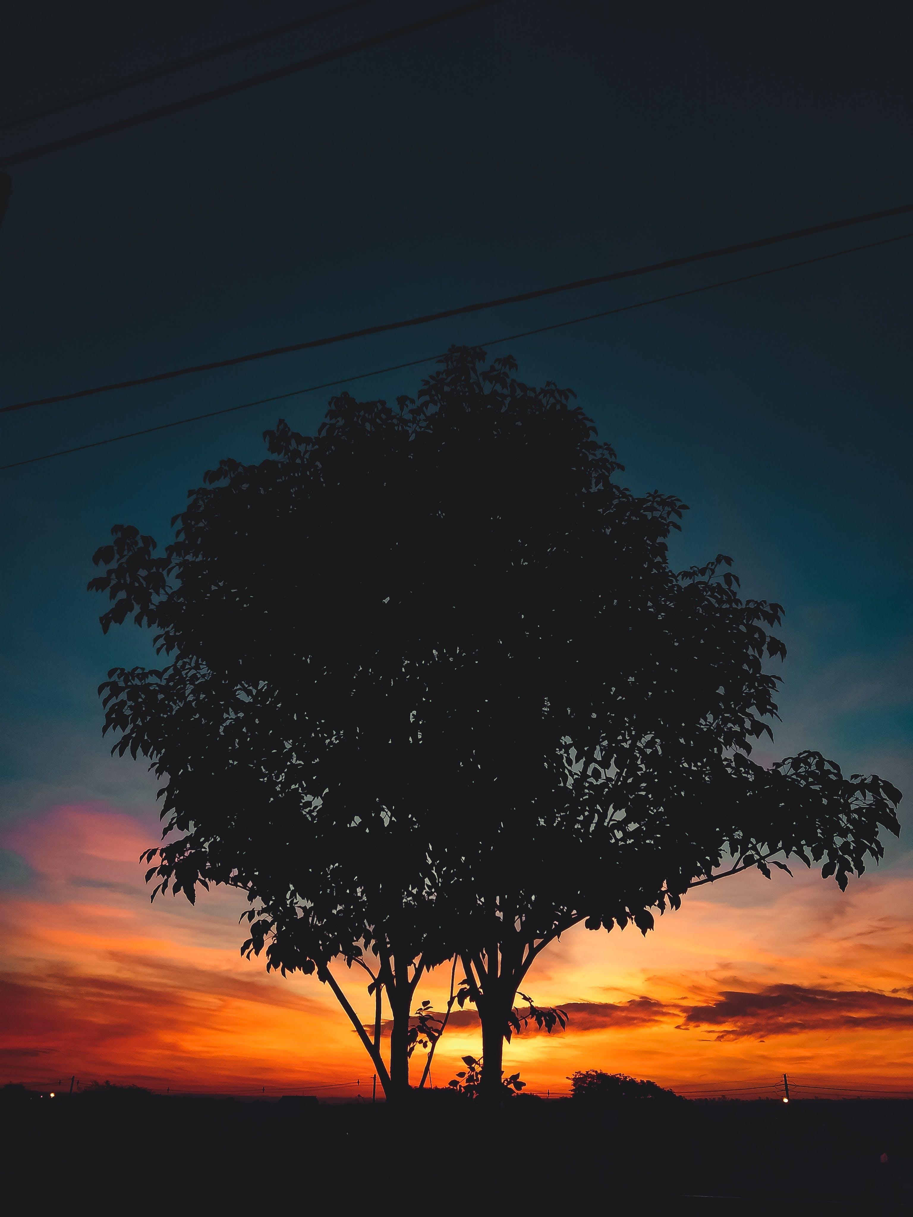 Gratis lagerfoto af aften, alene, bagbelyst, ensomhed