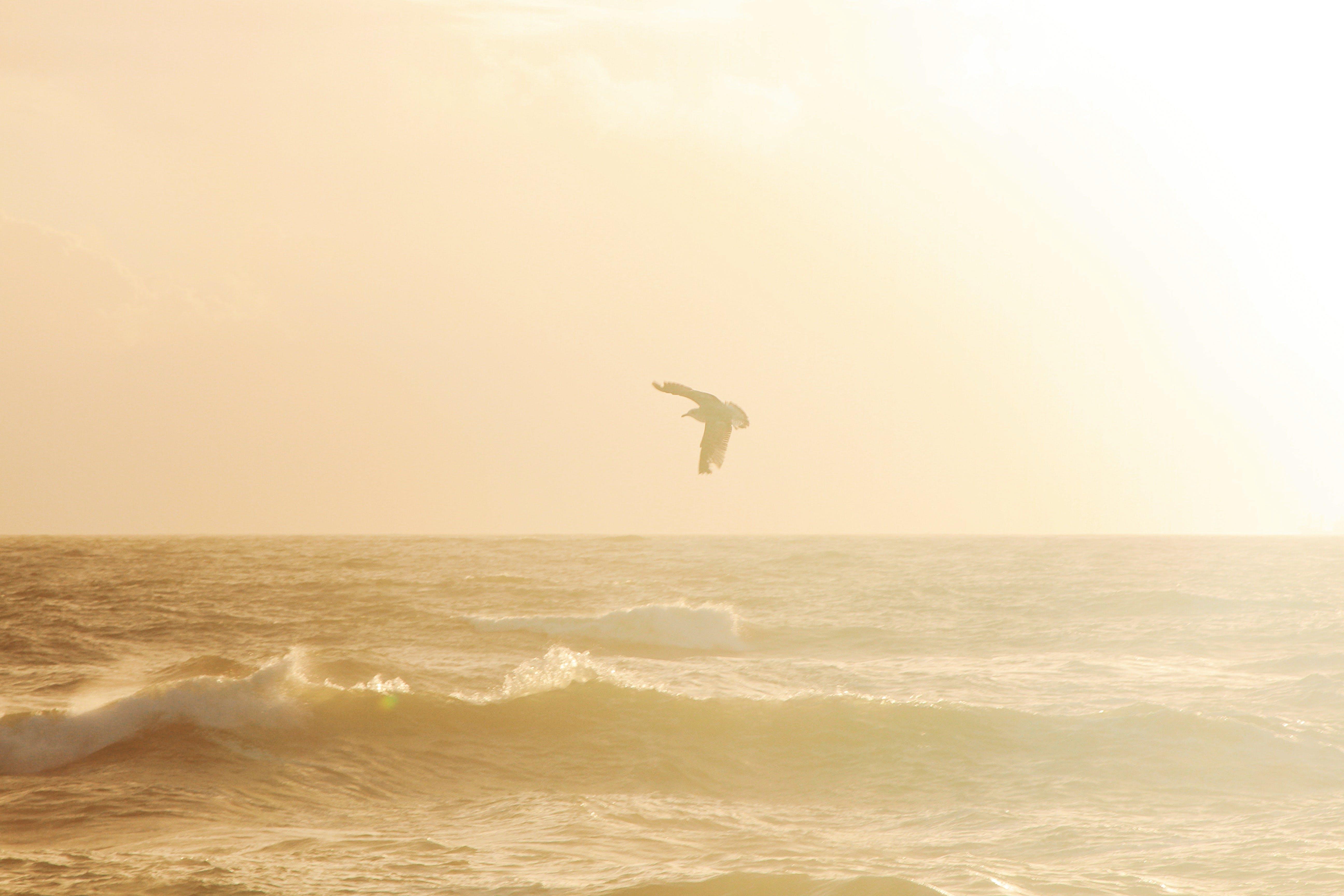 Foto stok gratis alam, angin, burung, gelombang