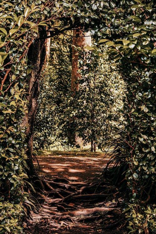Photos gratuites de centrales, chemin, environnement, jardin