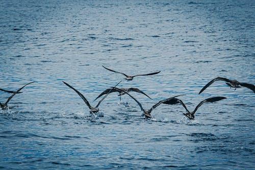 Безкоштовне стокове фото на тему «вода, дика природа, зграя птахів, море»