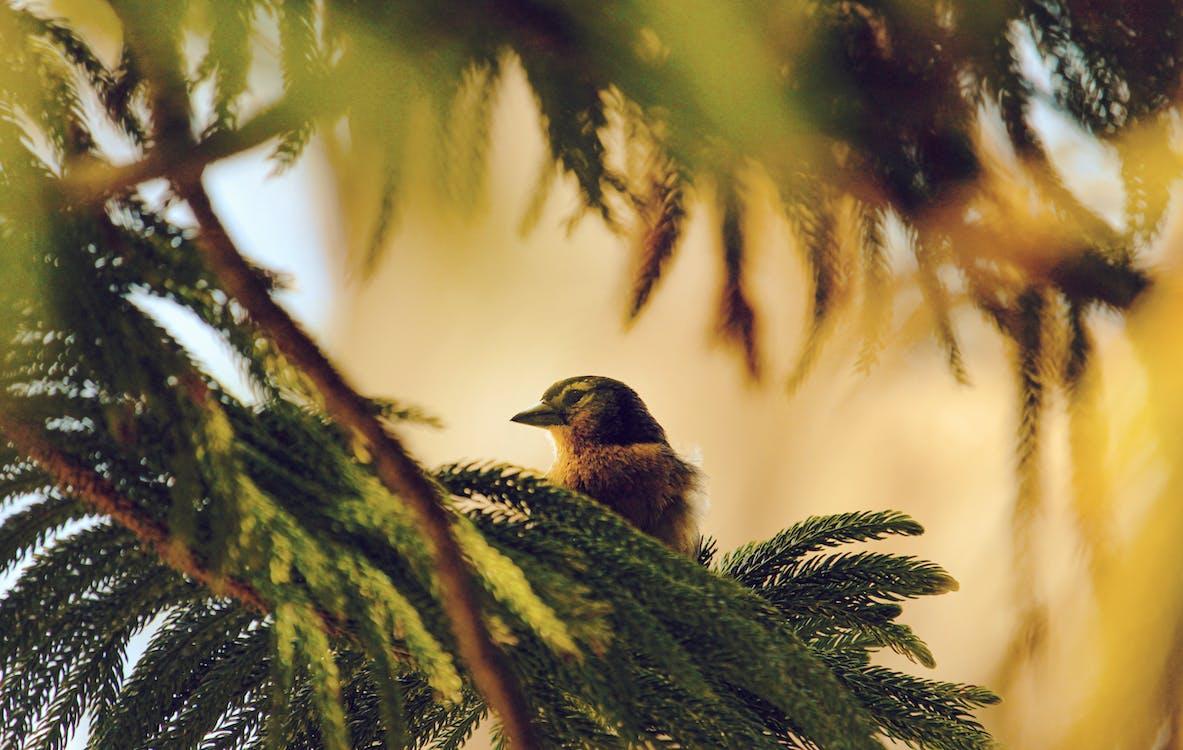 animal, arbore, aviar