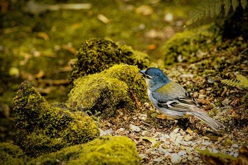 Kostnadsfri bild av djur, fågel, fink, liten