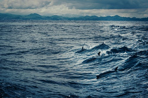 Ingyenes stockfotó állat, delfinek, emlősök, hullámok témában