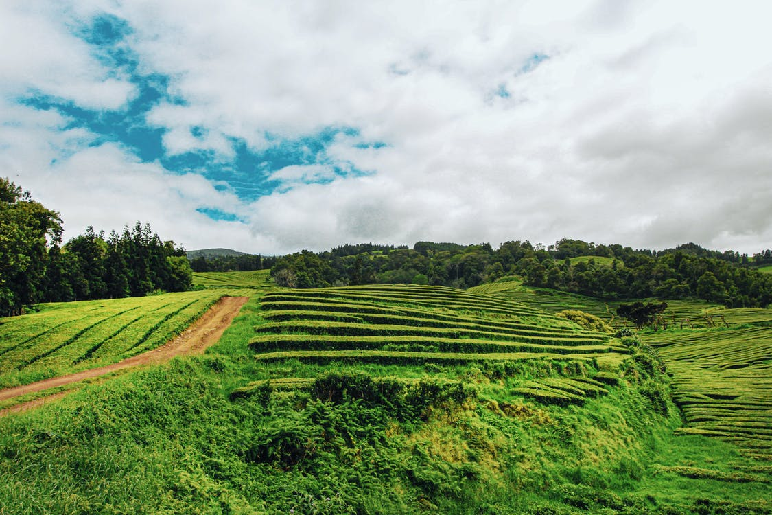 agricultura, camp, camp d'arròs