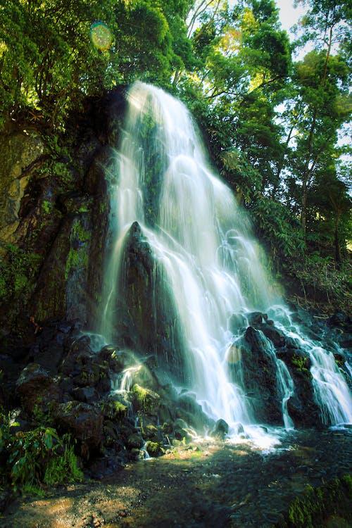 Fotobanka sbezplatnými fotkami na tému dažďový prales, kaskáda, malebný, pereje