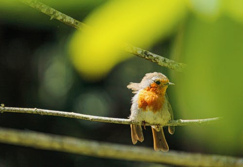 Selective Focus Photography of Bird