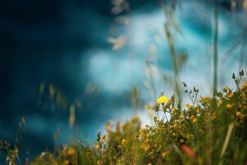 Foto stok gratis bidang, bunga-bunga, flora, kedalaman lapangan