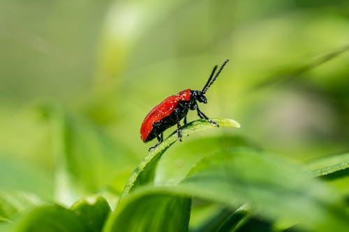 Gratis lagerfoto af Bille, græs, grøn, insekt
