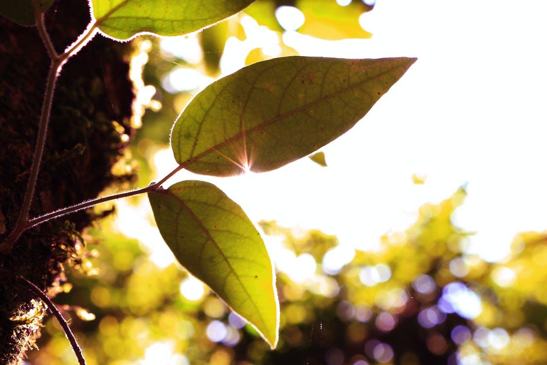grün, grünes blatt, sonnenlicht