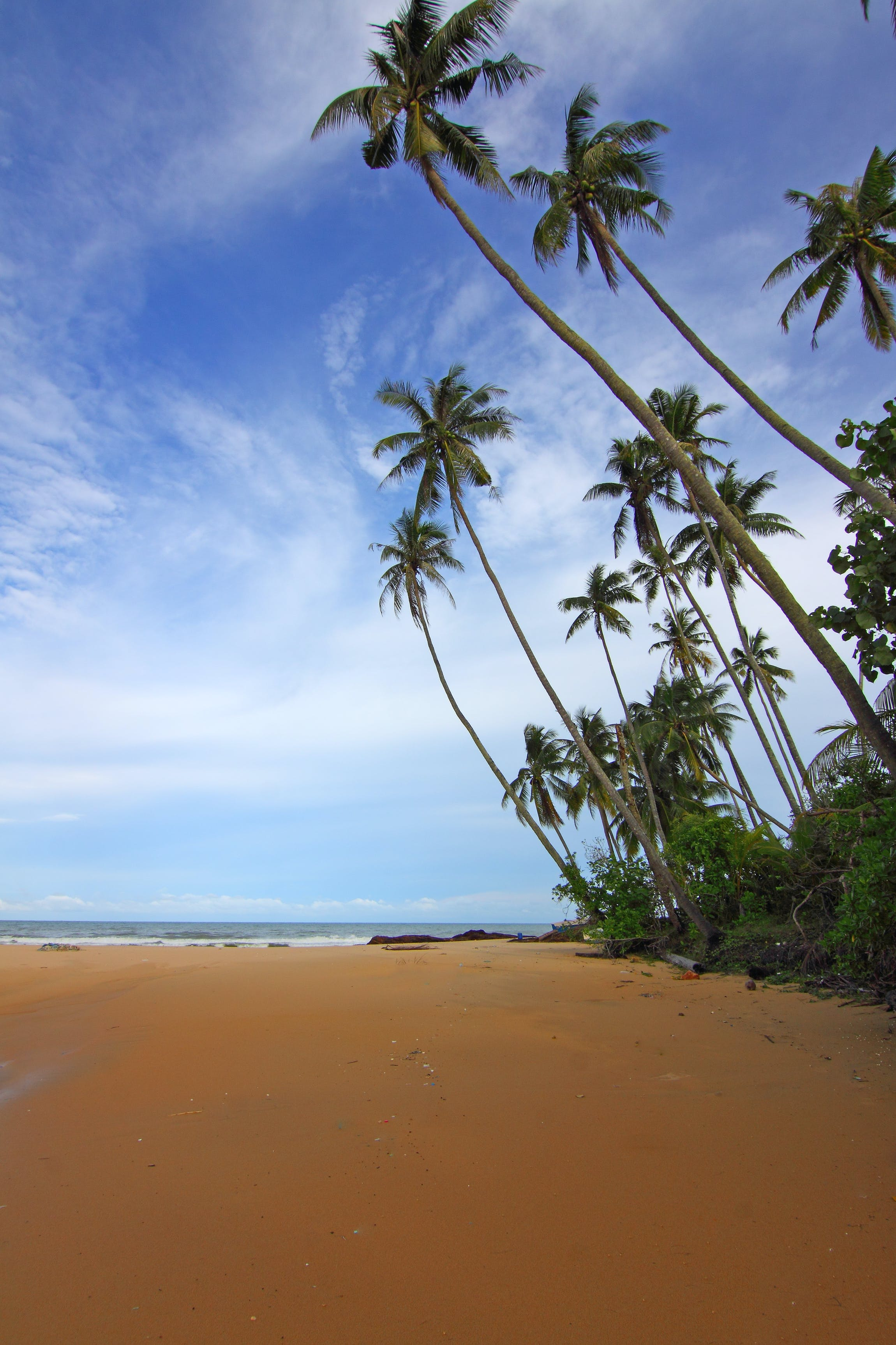 beach, clouds, coconut trees