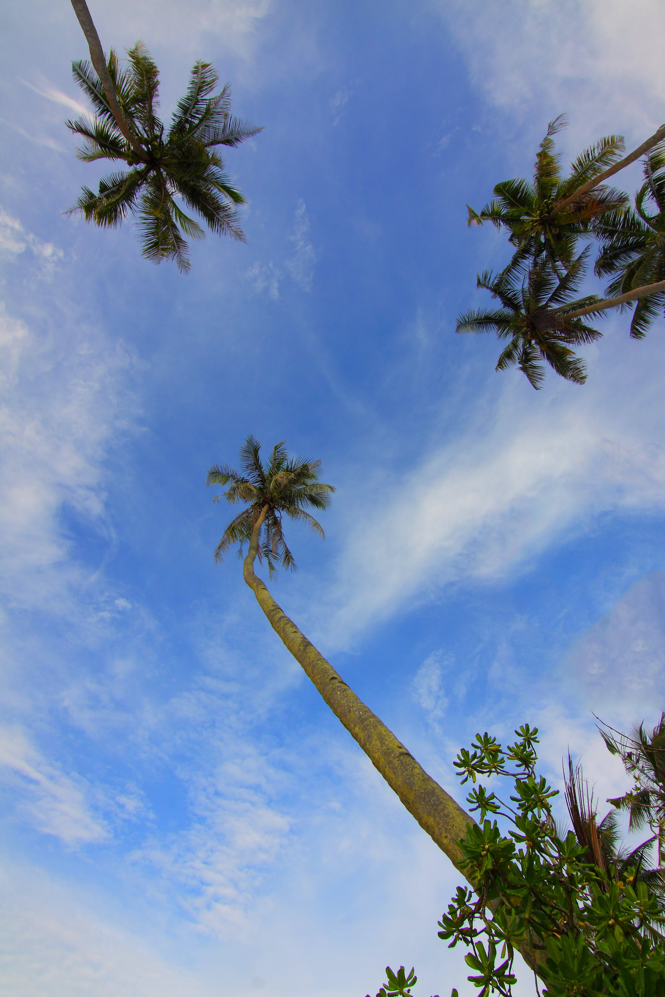 clouds, coconut trees, daylight