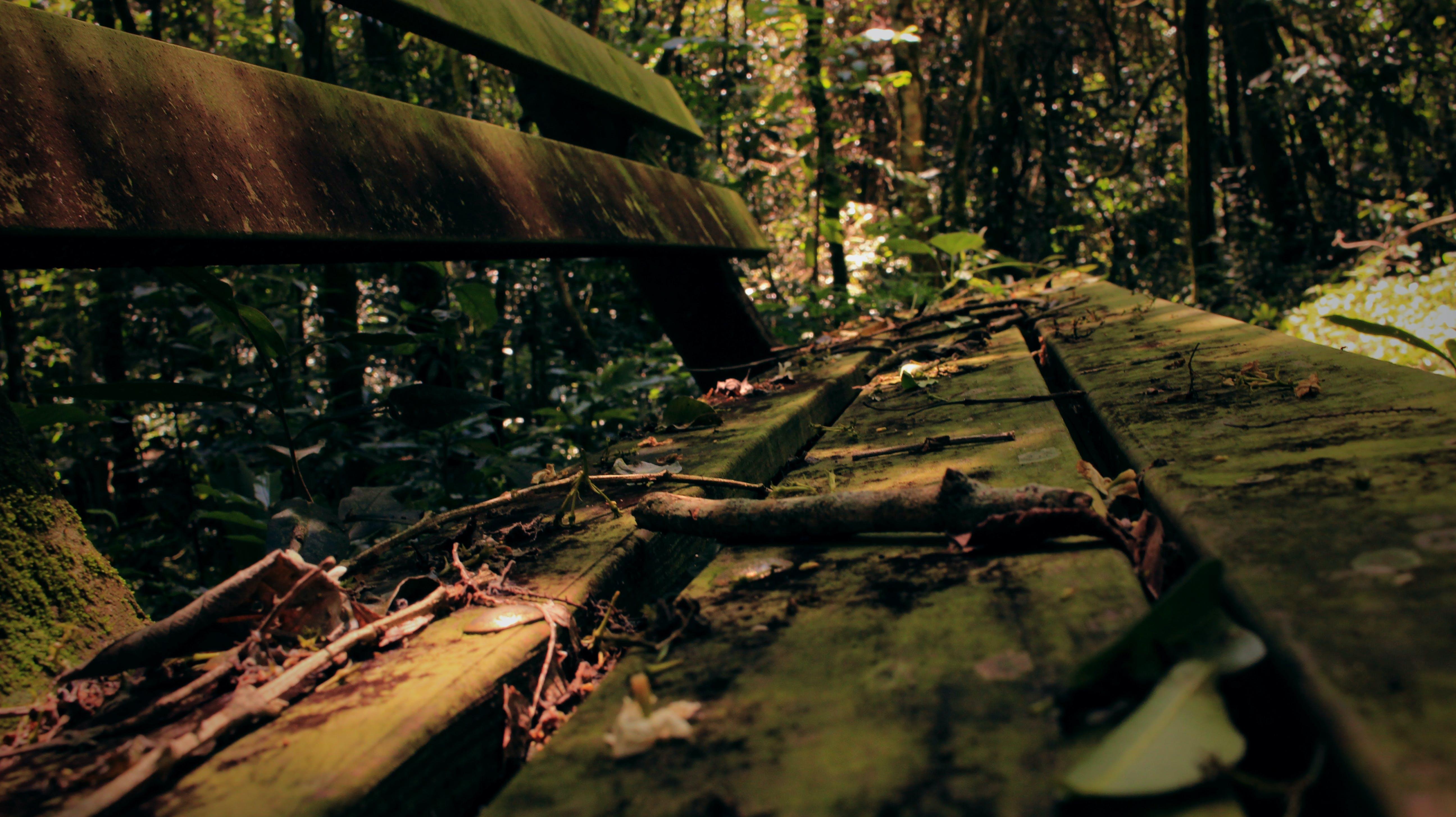 Kostenloses Stock Foto zu bank, bäume, dämmerung, licht