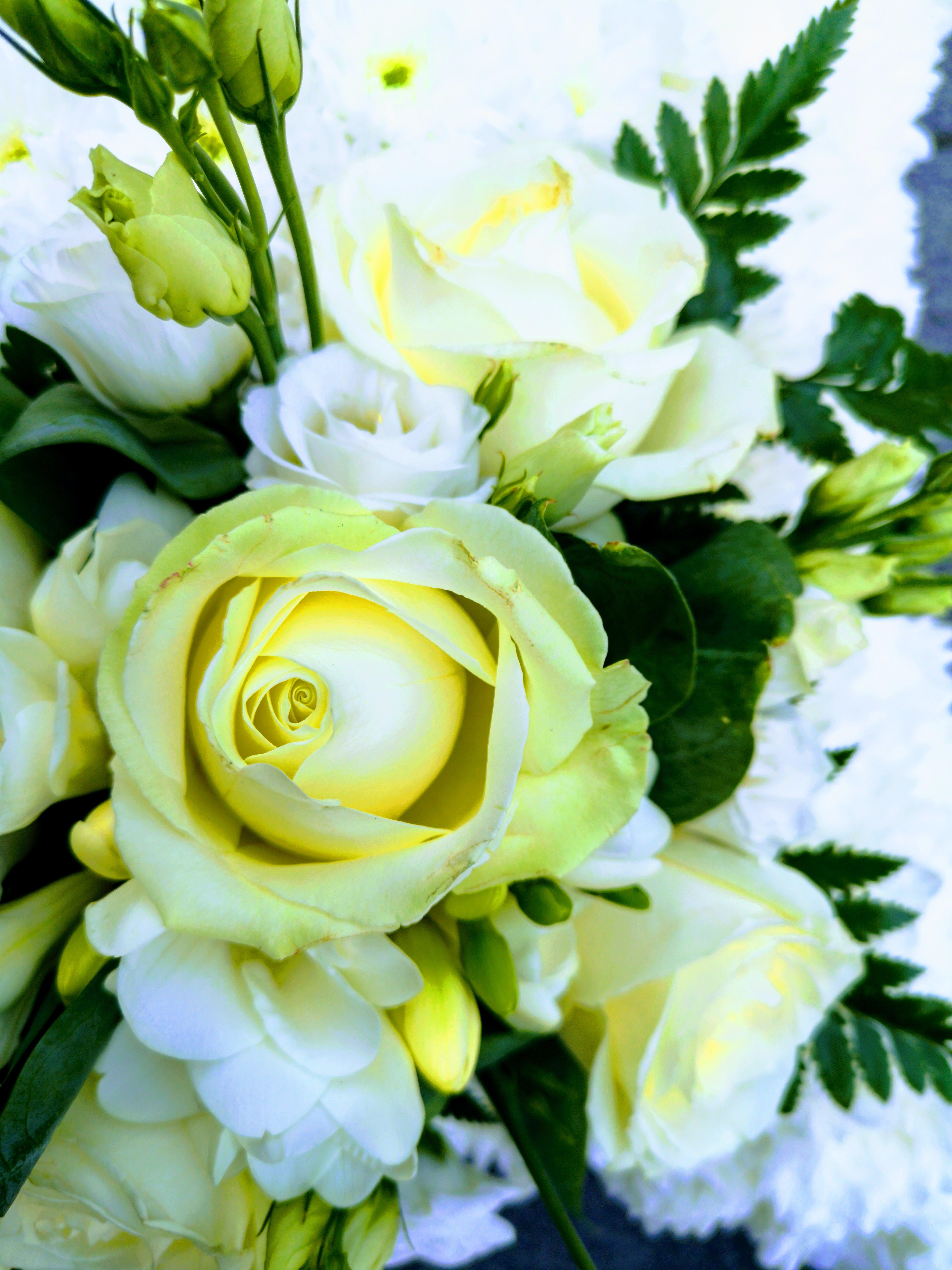 Darmowe zdjęcie z galerii z #natura, anglia, londyn, piękne kwiaty
