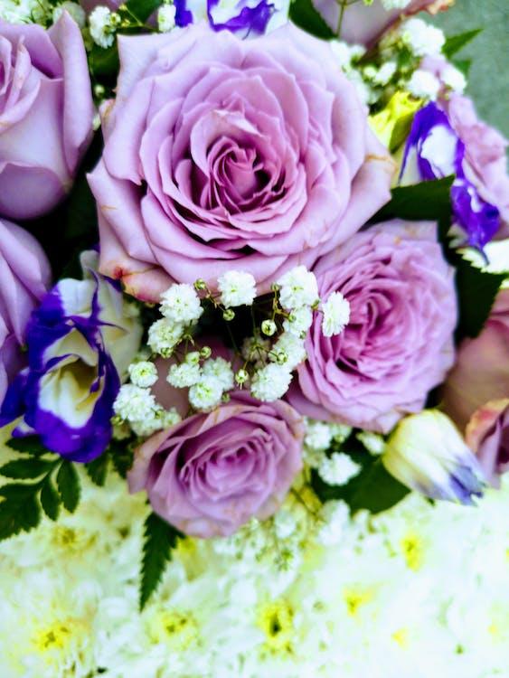Foto De Stock Gratuita Sobre Flores Bonitas Flores