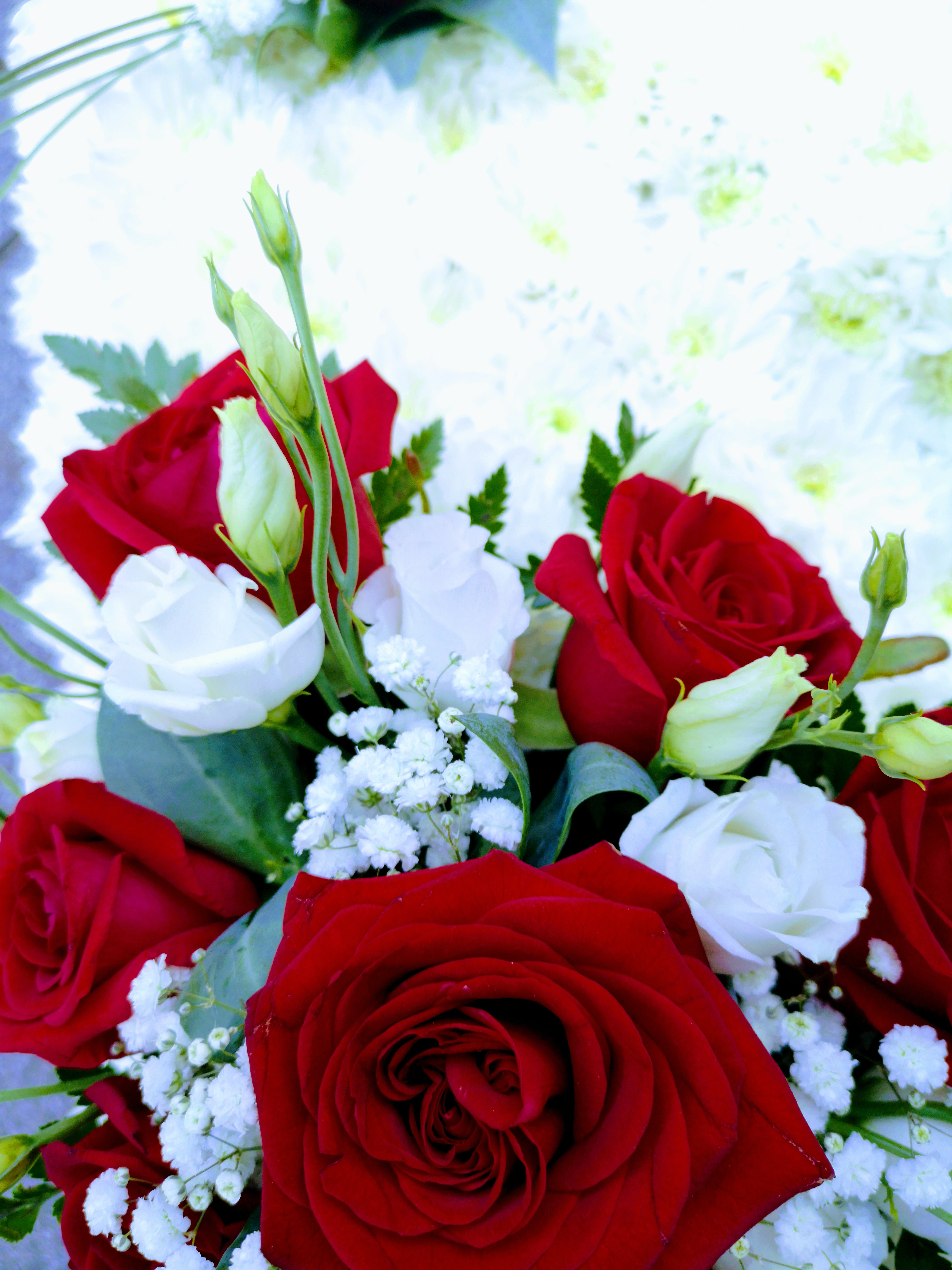Darmowe zdjęcie z galerii z anglia, ealing, londyn, naturalne kwiaty