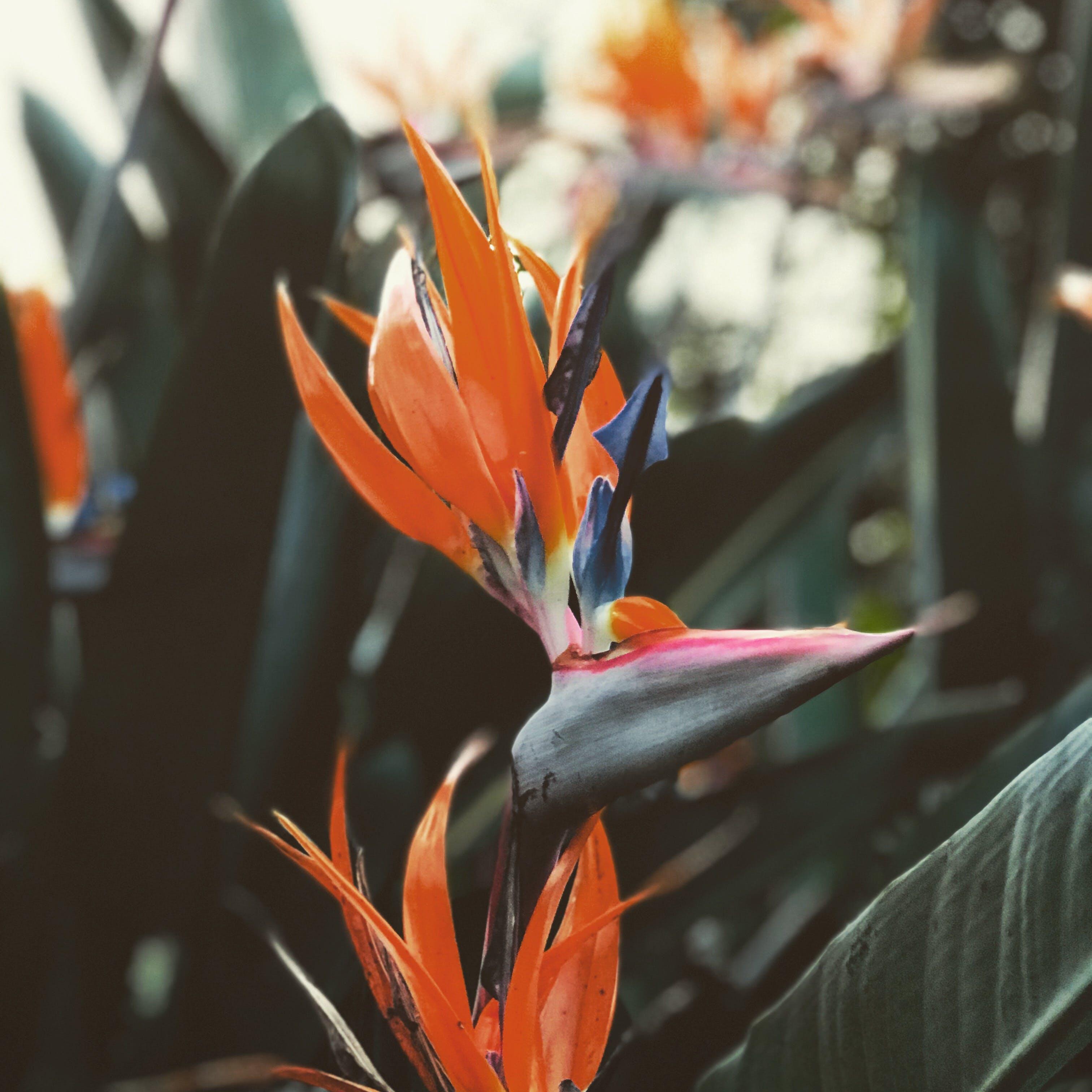 Δωρεάν στοκ φωτογραφιών με εργοστάσιο, λουλούδι, χλωρίδα