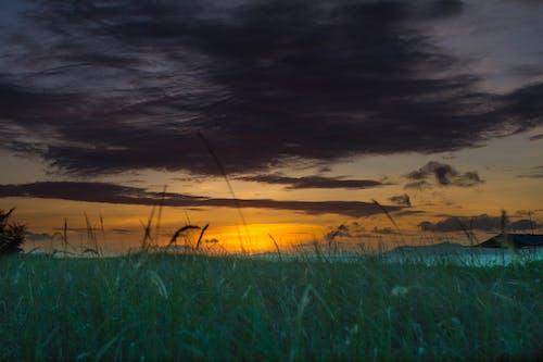 Kostenloses Stock Foto zu gras, grauer himmel, morgensonne