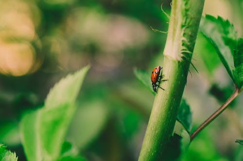 Selective Focus Photo of Ladybird on Green Stem