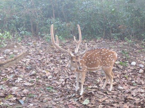 Free stock photo of deer, deers, photograph, safari