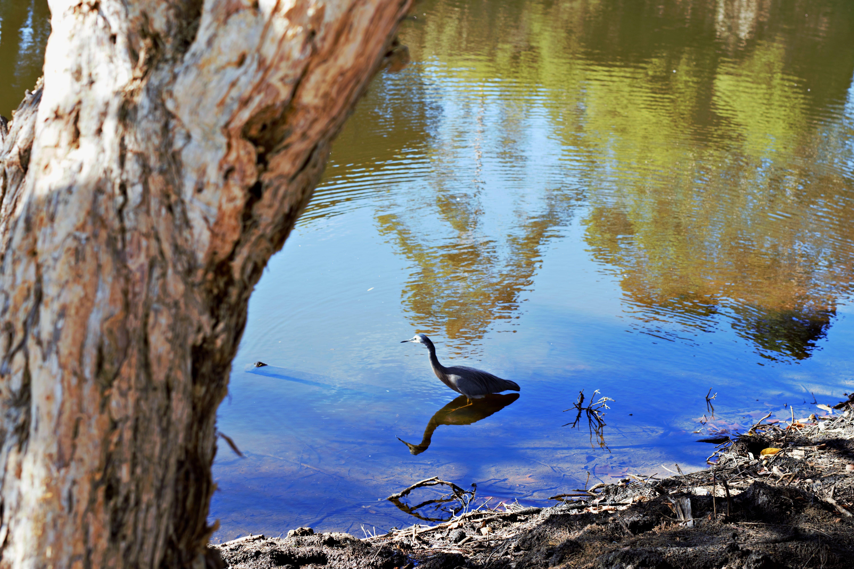Immagine gratuita di abbaiare, acqua, acqua naturale, calma