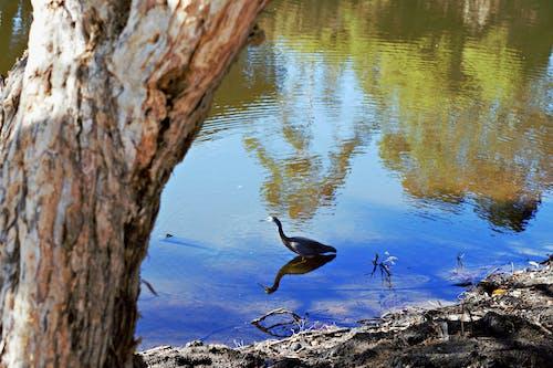 Kostnadsfri bild av bark, fågel, flod, flodbank
