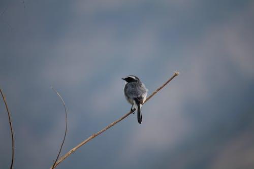 Free stock photo of bird, bird watching, birdwatching