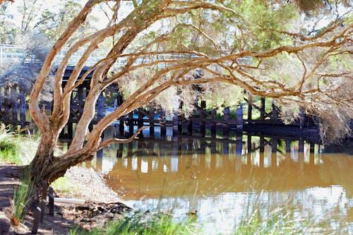 Kostnadsfri bild av bro, flod, flodbank, grumligt vatten