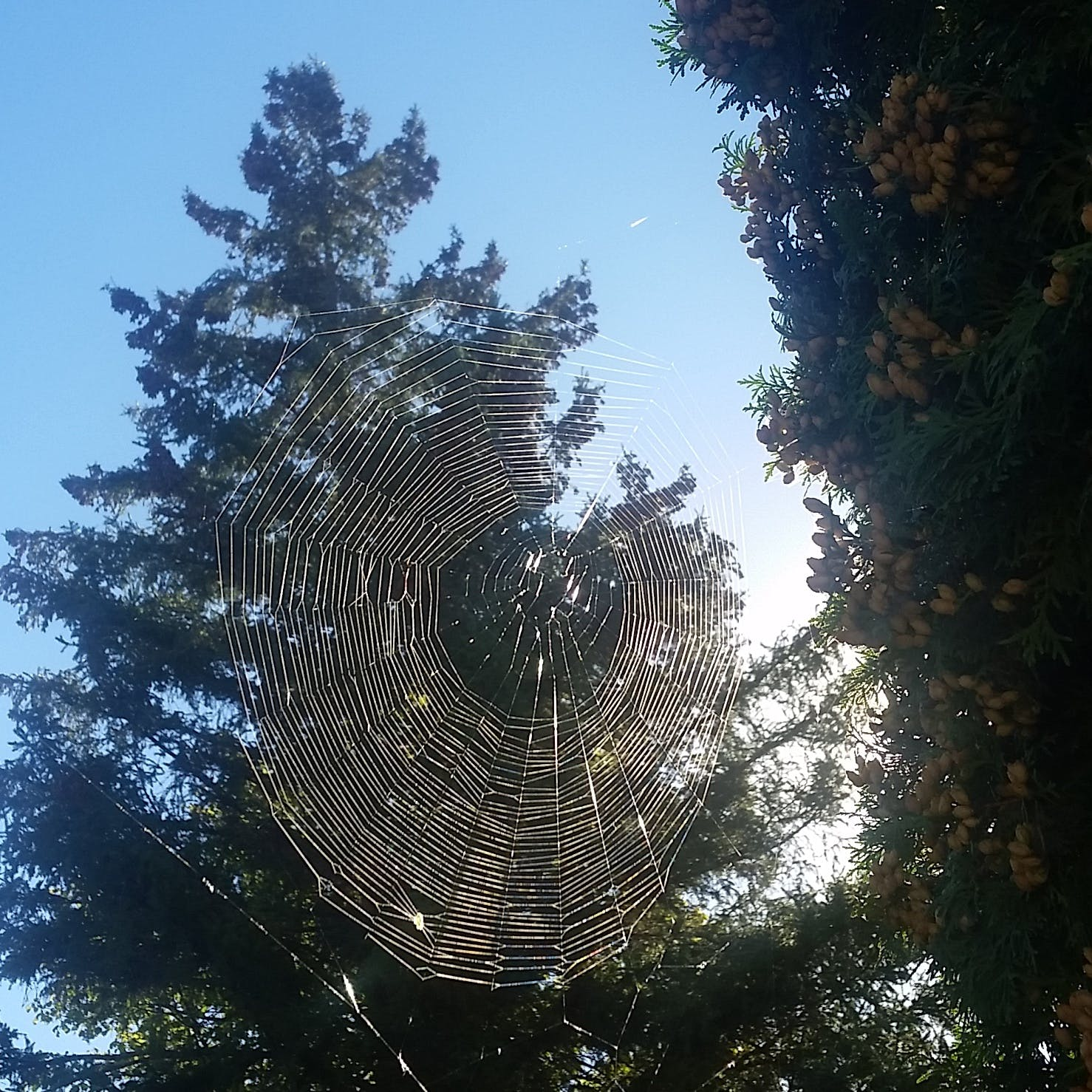 Free stock photo of cobwebs, fruits, spider, spider's web