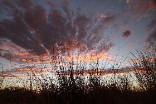 Бесплатное стоковое фото с закат африка, калахари, травяное поле
