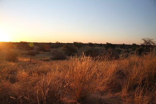Бесплатное стоковое фото с апельсин, Африка, закат, калахари