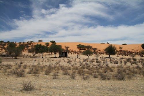 Бесплатное стоковое фото с африканский пейзаж